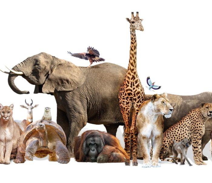 Parcs et Zoos